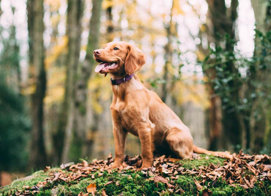 Hund i skogen